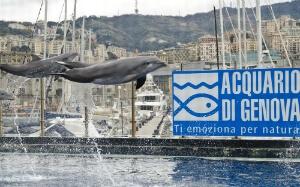 Dauphins à l'aquarium de Gênes